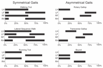 Gait - Gait graphs in the style of Hildebrand. Dark areas indicate times of contact, bottom axis is % of cycle