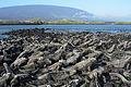 Galápagos Inseln, Ecuador (13898906036).jpg
