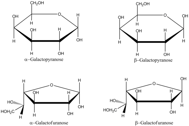 File:Galactose cyclic Haworth.png - Wikimedia Commons