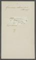 Gammarus obtusus - - Print - Iconographia Zoologica - Special Collections University of Amsterdam - UBAINV0274 098 02 0011.tif