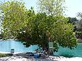 Gan Hashlosha National Park (Sahne) P1110863 (7113902215).jpg