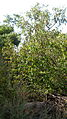 Garden Way - Wall - trees - streamlet - 17 Shahrivar st - Nishapur 22.JPG