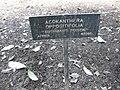 Gardenology-IMG 5010 hunt10mar.jpg