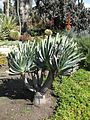 Gardenology-IMG 5155 hunt10mar.jpg