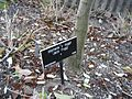 Gardenology.org-IMG 1010 hunt07mar.jpg