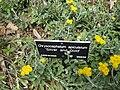 Gardenology.org-IMG 4527 hunt0904.jpg
