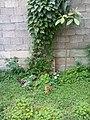 Gardens 15.jpg