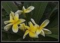 Gardens by the Marina Bay-122 (8358481305).jpg