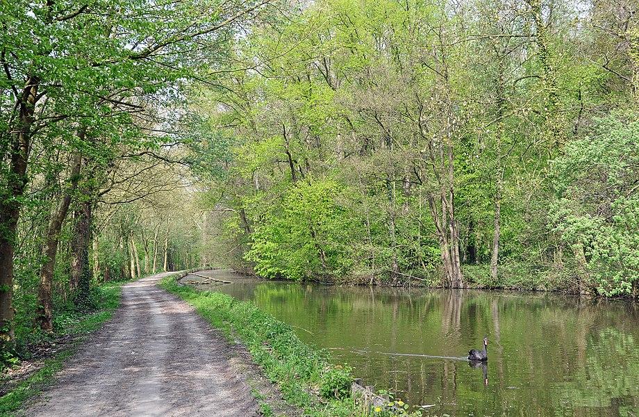Gavere (Belgium): pond