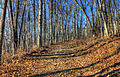 Gfp-missouri-babbler-state-park-winter-path.jpg