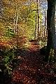 Glorat Wood Path - geograph.org.uk - 1576784.jpg