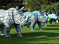 Go! Rhino (11653725934).jpg