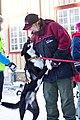 Gode forhold mellom hund og menneske (8435380973).jpg