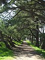 Golden Gate Park, San Francisco (4587829729).jpg