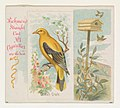 Golden Oriole, from the Song Birds of the World series (N42) for Allen & Ginter Cigarettes MET DP839257.jpg