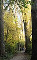 Golden Trees (87682821).jpeg