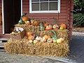 Gourds at the organic farm shop, Weiden West - geo.hlipp.de - 41363.jpg