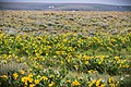 Grasshopper Flat, Malheur County (36948445445).jpg