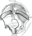 Gray130 Groove for transverse sinus.png