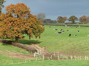 English: Grazing near Stottesdon, Shropshire A...