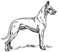 Great Dane (PSF).png