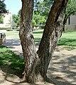 Gumtree2.jpg