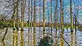 HDR Floods (12555494373).jpg