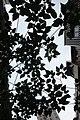 HK 上環 Sheung Wan 差館上街 Upper Station Street green tree 構樹 Broussonetia papyrifera June 2018 IX2 01.jpg