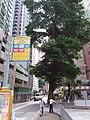 HK Mid-levels 般咸道 Bonham Road September 2018 SSG 08.jpg