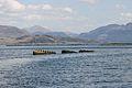 HMS Port Napier wreck 19.jpg