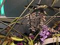 Haifa International Flower Exhibition P1140006.JPG