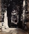 Hakoni, Japan; a tree-lined avenue Wellcome V0037651.jpg
