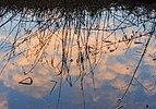 Halfbewolkte lucht reflecteert bij zonsopgang in met laagje ijs bedekte Jonkersloot. Locatie, De Famberhorst 02.jpg