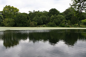 Hampstead Heath - A pond on Hampstead Heath
