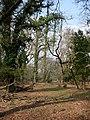 Hanging ivy - geograph.org.uk - 386184.jpg