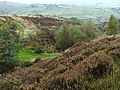 Hard Nese Clough - geograph.org.uk - 64461.jpg
