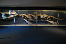 Harvard museum of natural history 2.JPG