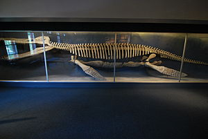 Museum of Comparative Zoology - Image: Harvard museum of natural history 2