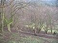 Hazel woods, The Hope - geograph.org.uk - 960930.jpg
