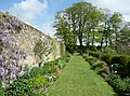 Herbaceous beds, Trerice, Newlyn - geograph.org.uk - 1370991.jpg