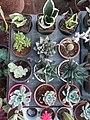 Herbs Plants 3.jpg