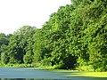 Heron - panoramio.jpg