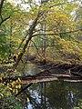 Heron Rookery - panoramio (1).jpg