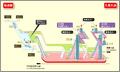 Hisaya-odori station map Nagoya subway's Sakura-dori line 2014.png