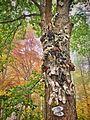 Hochzeitsbaum-Hochzeitsfotograf-Marc-Birkhoelzer.jpeg