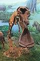 Hohhot.Inner Mongolia Museum.Platybelodon grangeri.jpg