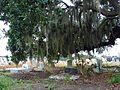 Holt Cemetery, New Orleans, LA Spanish Moss.jpg