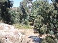 Horbat Qarta nature reserve (3).jpg