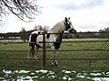 Horse pasture - geograph.org.uk - 739079.jpg
