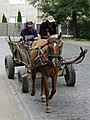 Horsecart and Passengers in Street - Berehove - Ukraine (36691983955) (2).jpg